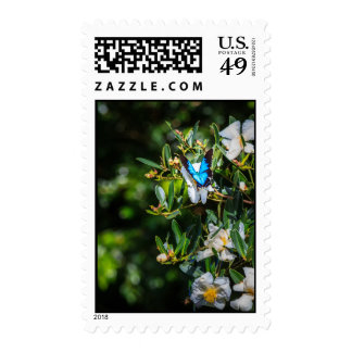Pretty Blue Butterfly on Flowers Postage Stamp
