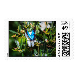 Pretty Blue Butterfly on Flowers Stamp