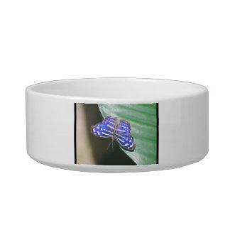 Pretty Blue Butterfly Pet Bowls