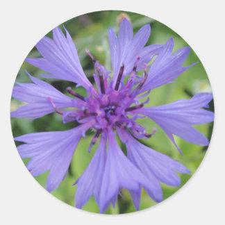 Pretty blue cornflower classic round sticker
