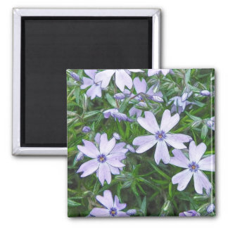 Pretty Blue Creeping Phlox Magnet