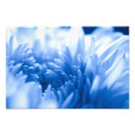 Pretty Blue flower Close Up Art Photo