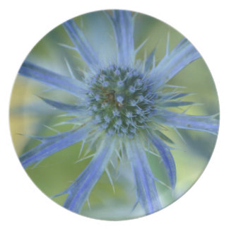 Pretty Blue Globe Thistle Party Plates