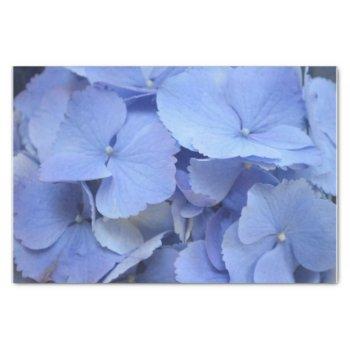 Pretty Blue Hydrangea Tissue Paper by PerennialGardens at Zazzle