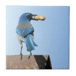 Pretty Blue Jay Bird & Peanut Tile