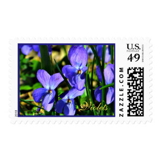Pretty Blue Violet Flowers Postage
