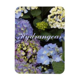 Pretty Blue White Hydrangeas Magnet