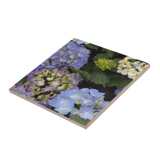 Pretty Blue White Hydrangeas Tiles