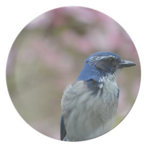 Pretty Bluebird Melamine Plate