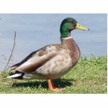 "Pretty Boy Statuette<br><div class=""desc"">Male Mallard duck</div>"