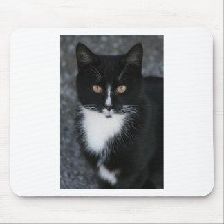 Pretty Boy Tuxedo Kitty Mouse Pad