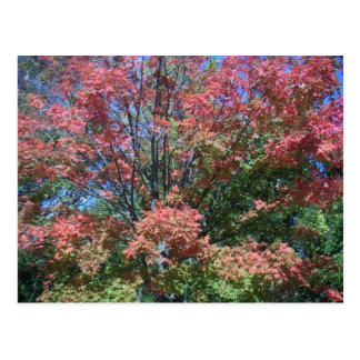 Pretty Bright Fall Colors Of Tree And Leaves Postcard