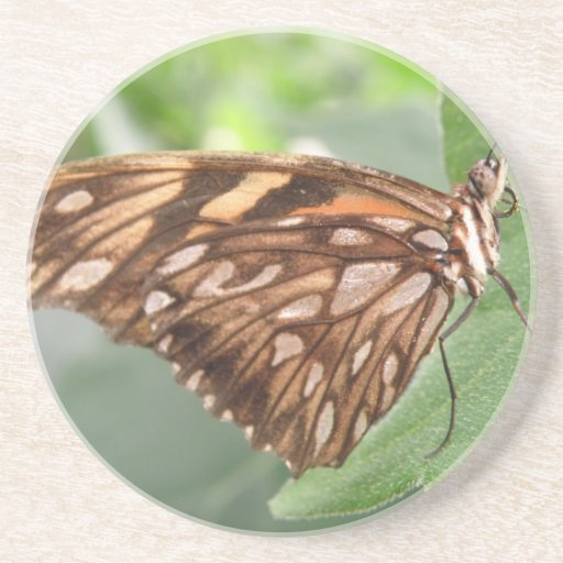 Pretty Brown Butterfly Coasters