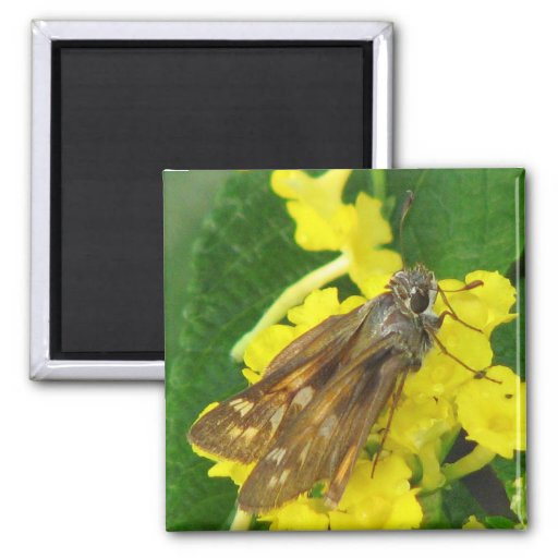 Pretty Butterfly 2 Inch Square Magnet
