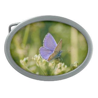 Pretty Butterfly Buckle Oval Belt Buckle