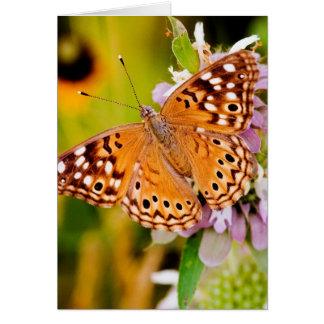 Pretty Butterfly Card