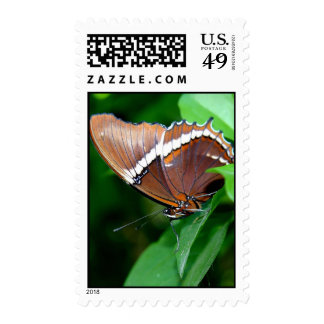 Pretty Butterfly, Costa Rica Stamp