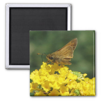 Pretty Butterfly Refrigerator Magnets