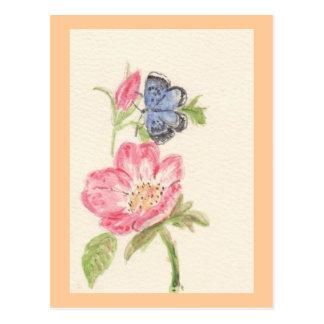 Pretty butterfly on pink flower postcard