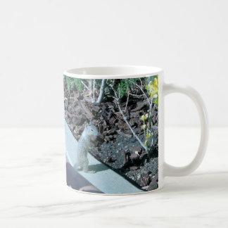 Pretty California Ground Squirrel Coffee Mug
