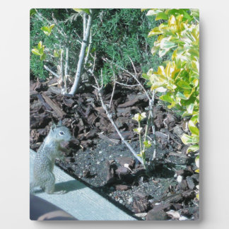 Pretty California Ground Squirrel Display Plaques