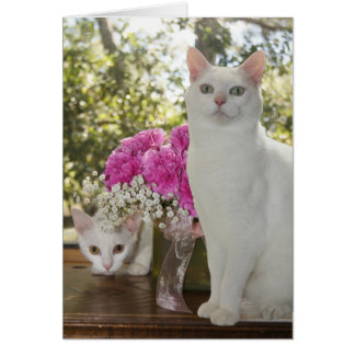 Pretty Cat and Kitten Mother's Day Card