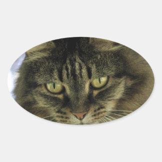 Pretty Cat on a Tree Oval Sticker