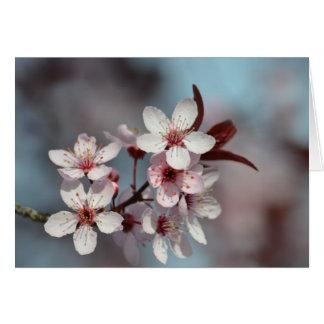 Pretty Cherry Blossoms Card
