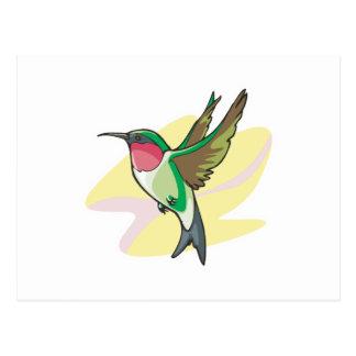 pretty colibri bird postcard