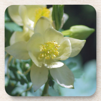 Pretty columbine flower and meaning coaster