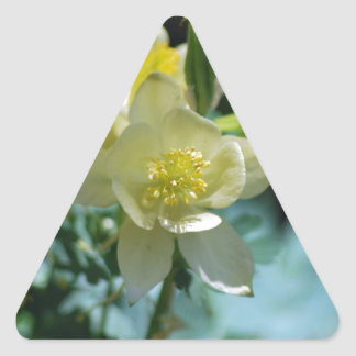 Pretty columbine flower and meaning triangle sticker