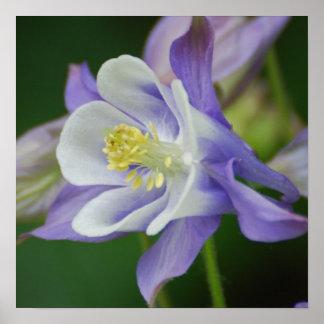Pretty Columbine Flower Print