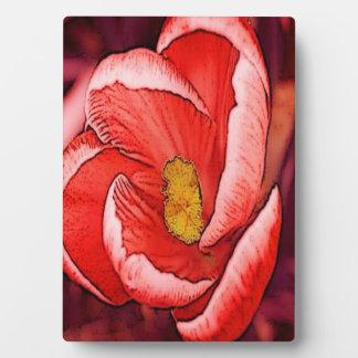 Pretty Coral Crocus Flower Plaque