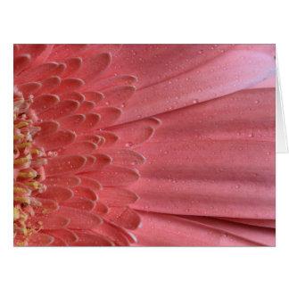 Pretty Coral Pink Gerbera Daisy Card