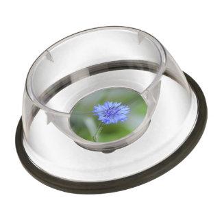 Pretty Cornflower Pet Bowl