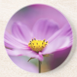 Pretty Cosmos Flowers Beverage Coasters