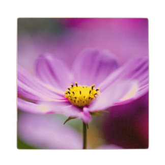 Pretty Cosmos Flowers Wood Coaster