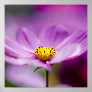 Pretty Cosmos Flowers Print