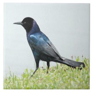 Pretty crow blackbird Tile