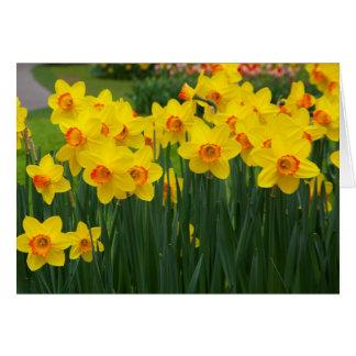 Pretty Daffodiles Card