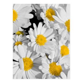 Pretty Daisies Postcard