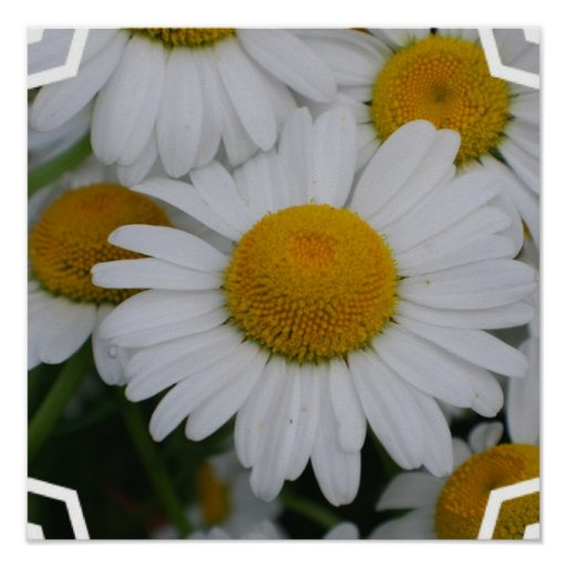Pretty Daisies Posters
