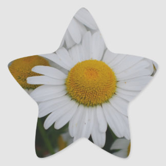 Pretty Daisies Star Sticker