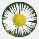 Pretty Daisy Round Sticker