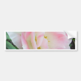 Pretty Delicate Feminine Flower White Pink Gifts Bumper Sticker
