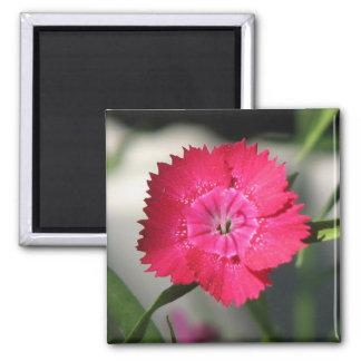 Pretty Dianthus Magnet