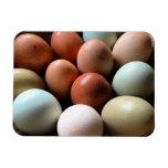 Pretty Eggs From Chicken Farm Rectangular Photo Magnet