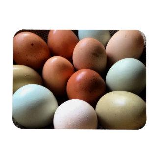 Pretty Eggs From Chicken Farm Rectangular Magnets