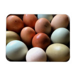 Pretty Eggs From Chicken Farm Rectangular Photo Magnet