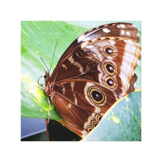 pretty eye butterfly moth brown tan bug nature canvas print